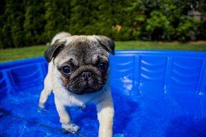 Typy basenów kąpielowych – basen dla dzieci