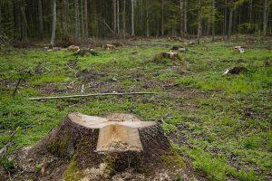 Regularne wycinanie drzew