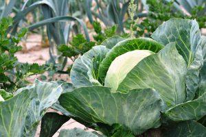 Korzystanie z warzywnika w skrzyniach